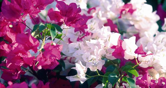 Blüten auf demBett