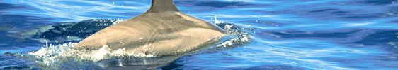 Auf Delfinschau an der Westküste