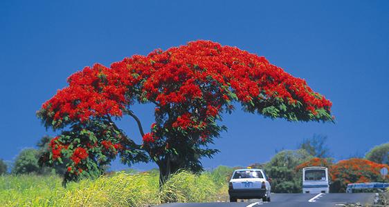 Nach Hause nach Mauritius
