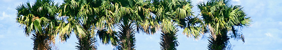 La Réunion: Action ist hier Pflicht