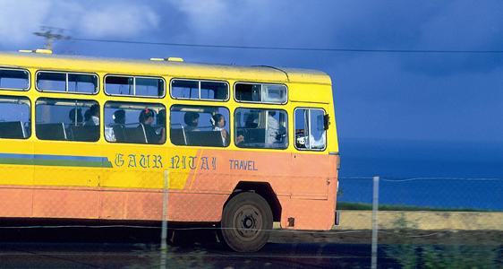 Mit dem Bus vorbei an Ziegen, Küken, Lockenwickler