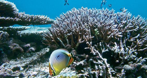 Unter Wasser und anLand