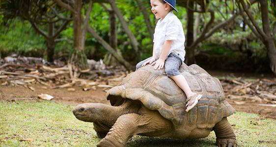 Mauritius individuell mit Kindern