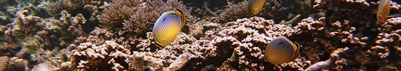 Unlimited Diving im Le Victoria